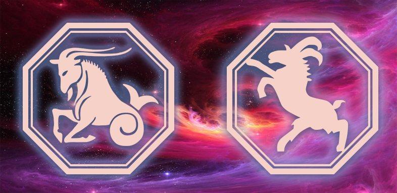 Козерог - Коза (овца): Характеристика