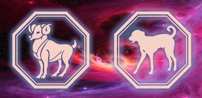 Овен - Собака: Характеристика