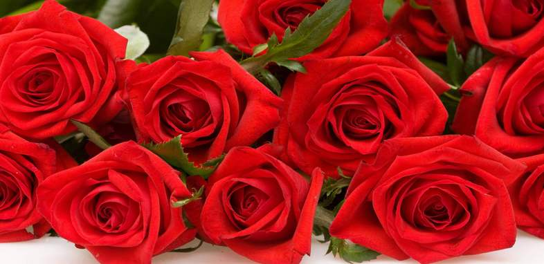 Роза по цветочному гороскопу