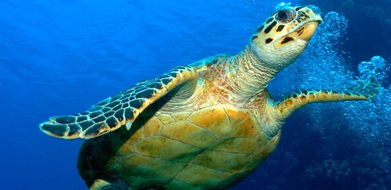 Черепаха по зороастрийскому гороскопу