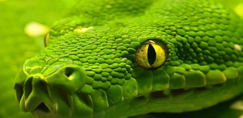 Змея по зороастрийскому гороскопу