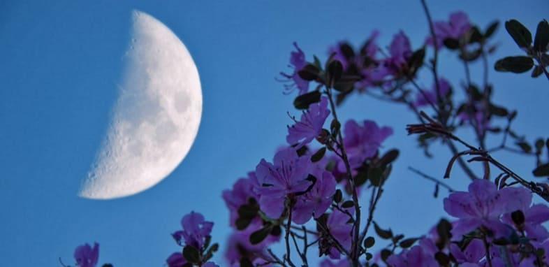 Лунный календарь на 10 июля